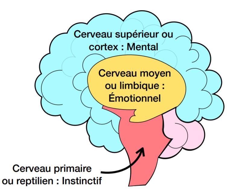 Les différents niveaux du cerveau- Surmonter ses peurs et phobie- confiance en soi- Votre transformation spectaculaire par la libération émotionnelle, le nettoyage des blessures du passé et des croyances négatives.NERTI, EMDR, Kinésiologie