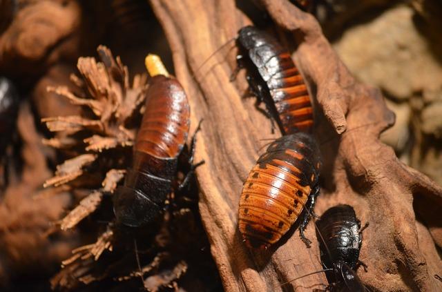 Entomophobie-Peur des insectes.