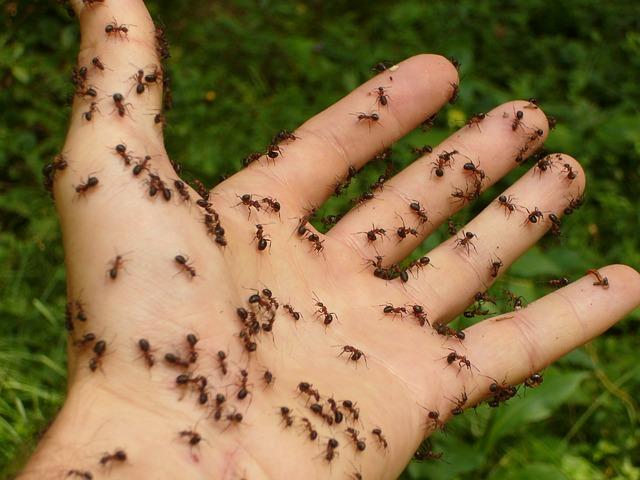 Myrmécophobie- peur des fourmis