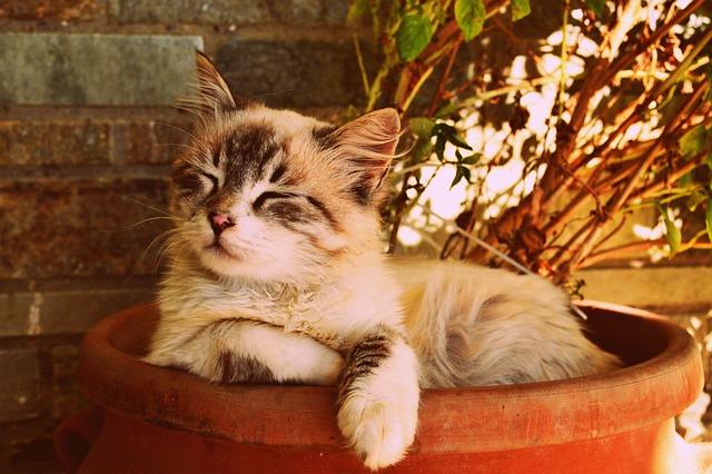 Ailourophobie-Peur des chats.