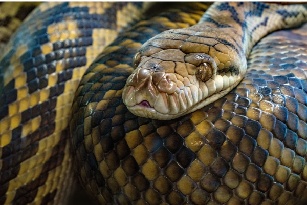 serpent-- Surmonter ses peurs et phobie- confiance en soi- Votre transformation spectaculaire par la libération émotionnelle, le nettoyage des blessures du passé et des croyances négatives.NERTI, EMDR, Kinésiologie