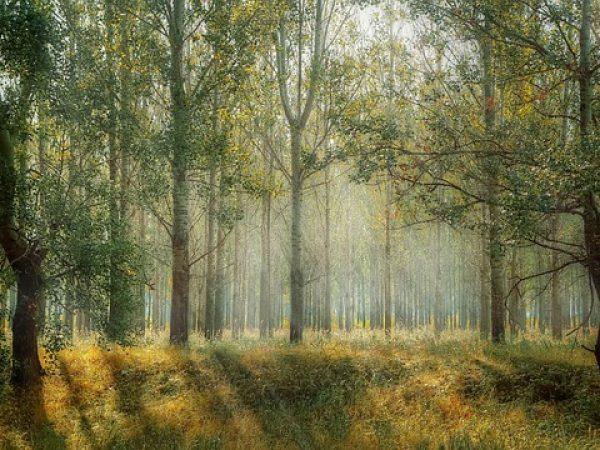 Dendrophobie-Peur des arbres.
